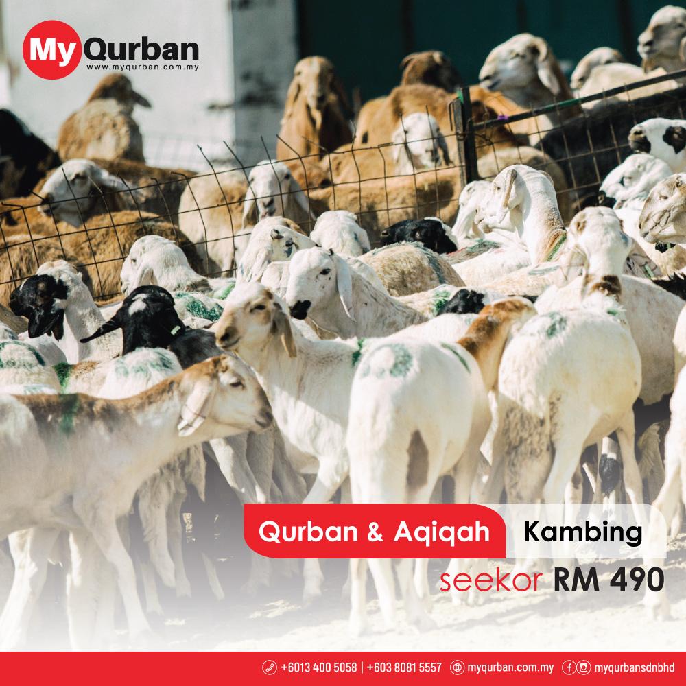 Qurban-&-Aqiqah_Kambing