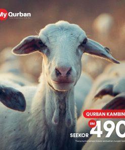 MyQurban Qurban Kambing